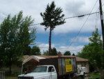 ashland fir.JPG
