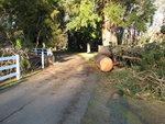pine gate way 005.jpg