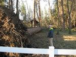 pine gate way 007.jpg