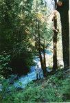 misc trees 037.jpg