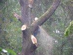 trees 018 (Large).jpg