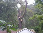 trees 021 (Large).jpg