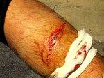 Ox's polesaw cut 001.jpg