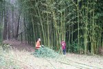 Hayden-bamboo-rope-ladder_047.jpg
