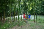 bamboo001_052.jpg