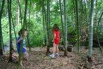 bamboo001_024.jpg