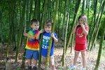 bamboo001_029.jpg