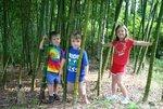 bamboo001_030.jpg