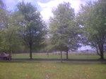 maple trees 003.jpg