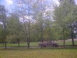 maple trees 004.jpg