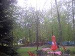 maple trees 005.jpg
