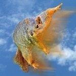 TwirlaSquirrelshot3.jpg