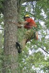 Cut Trees Sharer Road 8-2-08 062.jpg