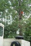 Cut Trees Sharer Road 8-2-08 059.jpg