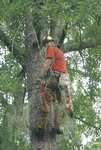 Cut Trees Sharer Road 8-2-08 058.jpg