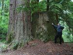Old stump 2.jpg