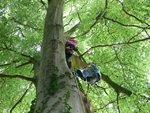 tree climb 028 (Small).jpg