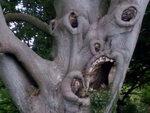 creepy-trees.jpg