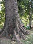 rotator tree.jpg