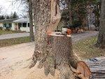 short bar notch co dom white oak.jpg