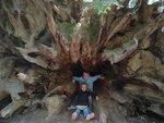 Redwoods 087 (Medium).jpg