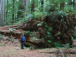 Terri root wad 1.jpg