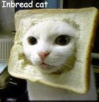 in bread cat (385x400).jpg