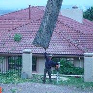 Treehuggn4life