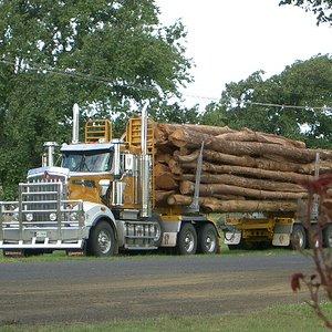 bermy-log-truck.jpg