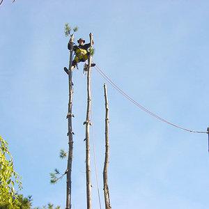 Big_man_little_tree.jpg