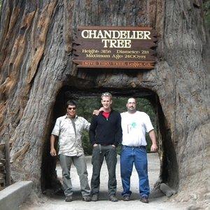 chandler_tree.jpg