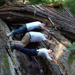 redwoods09_151.jpg