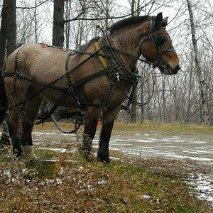 rskybiz-horse1.jpg