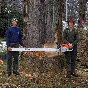 treebogan-six-foot.jpg